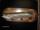 Earl Mincks reproduction Northern Pike